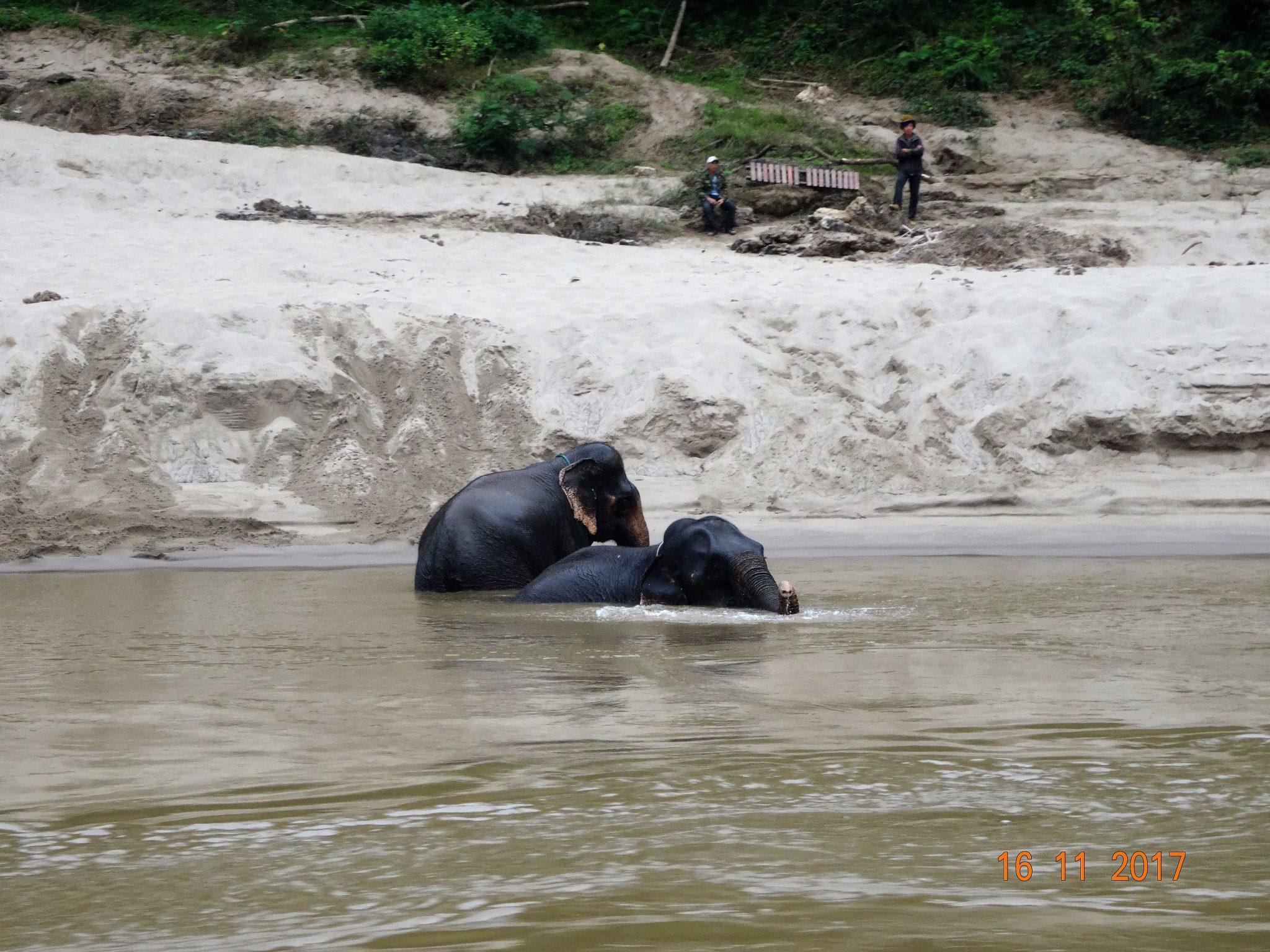 ein sauberes Elefantenbad